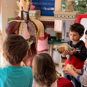 human-body-parts-anatomy-science-for-kids-popsicle-land